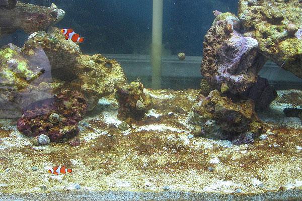 Cyanobacteria: Red/Brown/Black & Dinoflagellates