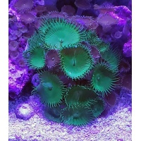 parent-zoa-ugrpaly